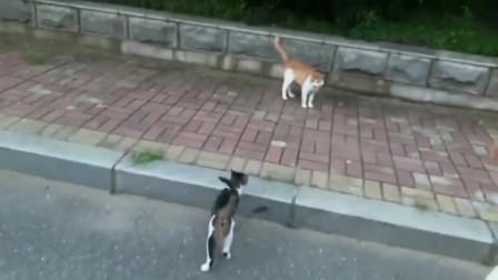 大型有猫纪录片,看别人是如何快速拥有猫咪的哈哈