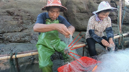 泰叔泰婶拉回一船渔网,拉上一条毒货却值两三百一斤,上岸就抢光