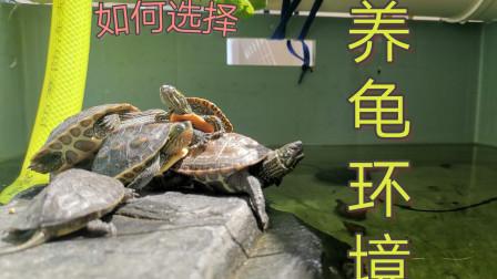 怎样养龟省时省力——养龟环境如何选择