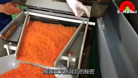 揭露三文鱼背后的秘密,每年给日本带来数万元收益,网友:太气人了