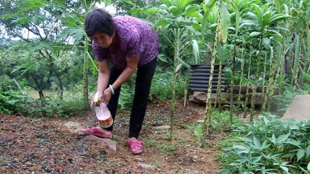 农村生活,你种菜我除草菜园里忙碌起来,慢节奏的生活太幸福了!