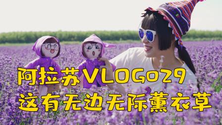 Vlog29去到全是薰衣草的世界