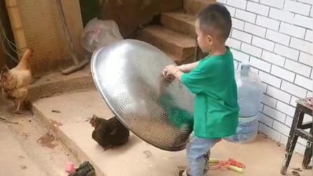 今天专门到外婆家来抓鸡,这个方法有效果