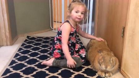 父亲在野外捡到一只小兔子,带回家悉心照顾,长大后全家都要哭了