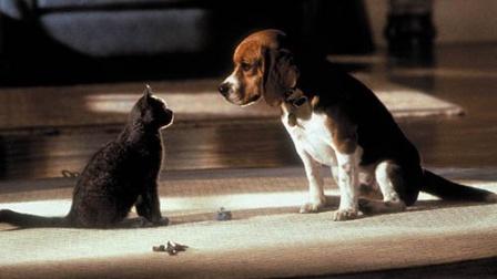 猫狗大战,打的满地找牙