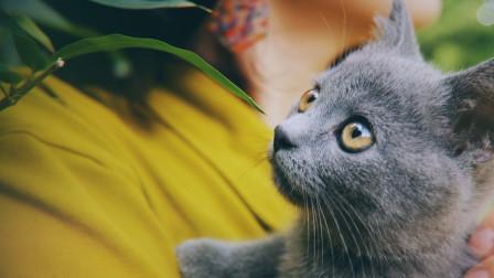 Vlog 新建文件夹:新手养猫攻略