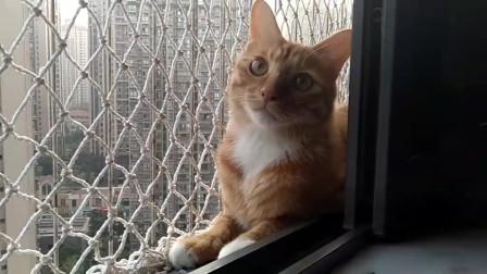 别人家的猫,怎么看都那么可爱呢
