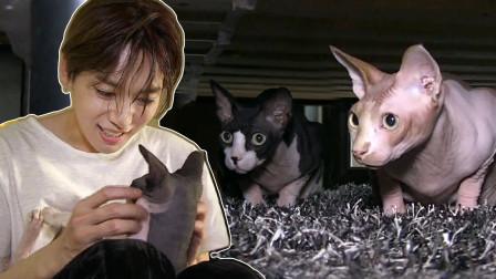 秦禹有猫毛过敏症!但这也无法阻挡他对猫咪的爱呢