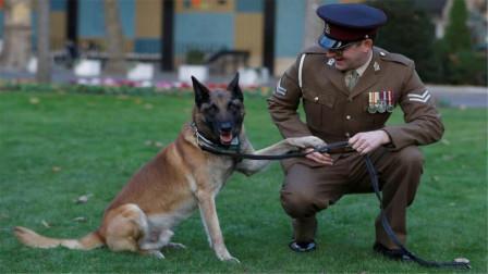 """军犬究竟有多""""天才""""?现场直击训练画面,看完后一定要忍住笑"""