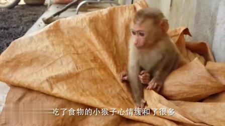 当小猴子主动招惹狗子,两者直接打了起来