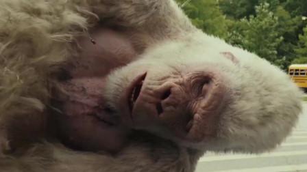 一瓶奇怪的东西,让大猩猩变异了,与强子拯救了人类