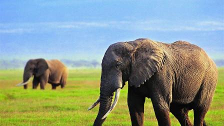 蛇有七寸,大象的七寸是哪?鳄鱼竟想一招致命!
