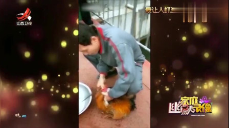 家庭幽默录像:大哥晚上想吃鸡,刚准备杀鸡放血,没想到这是一只有尊严的鸡啊……