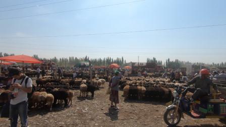 自驾游新疆,来到喀什大巴扎,看看这边的牛羊牲畜都什么行情