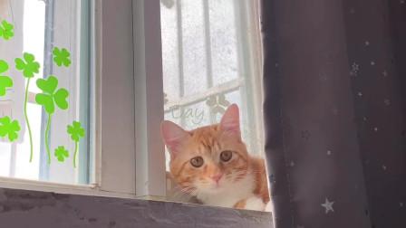 一只可爱橘猫正在和你捉迷藏,喜欢吗?