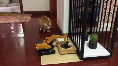 当着橘猫的面,用挖掘机偷走一铲子猫粮,猫咪的表情太逗了