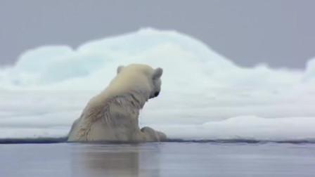 北极熊在水中游泳, 突然放了个屁, 让人意外的画面发生了