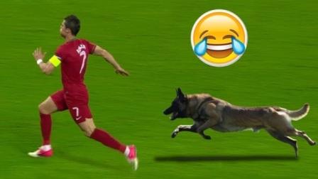 足球场上的不速之客:动物进入足球场瞬间,球员反应才是最大亮点