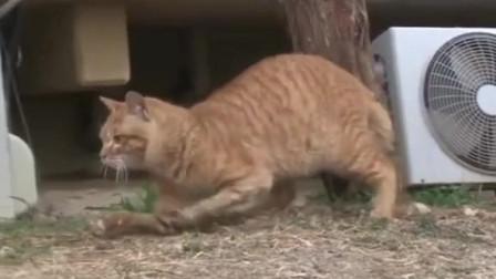 萌宠:受伤小猫前脚不能站立,好心人帮其搭建猫窝,真有爱