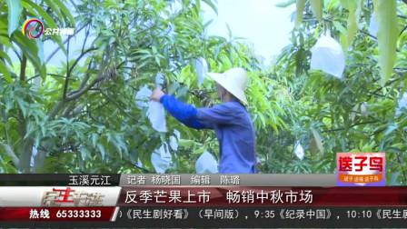 高温天气水果户损失惨重,反季节芒果上市一路畅销,农户乐开花!