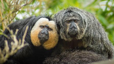 南美惊现百毒不侵的佛系生物!实力堪比扫地僧