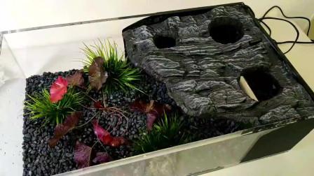 超简单的入门级水陆生态鱼缸的制作方