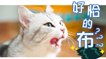 猫咪懒的像滩泥,没有吃的绝不动弹,没想到看见这块布后嗨了