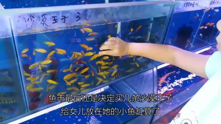 小白如何购买到健康的观赏鱼,看一次就能学会的买鱼技巧