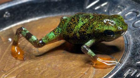这种生物曾被认为已灭绝,时隔14年却再次现身