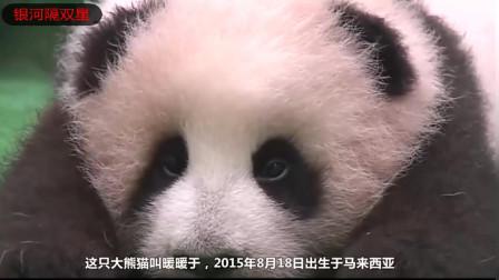 大熊猫饲养成本太高,导致动物园缩减别的开支!