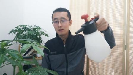 室内养护花卉,多做这1步很有用,花友们不要忽略
