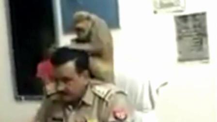 印度猴子跑进警局帮警察理头发