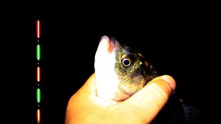 夜钓时,大板鲫的浮漂信号是怎样的?原来就是这样