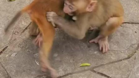 不让人家宝宝跟自己的宝宝玩就算了居然咬人家宝宝