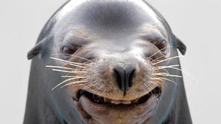 海狮表情精准到位,这才叫专业演出!