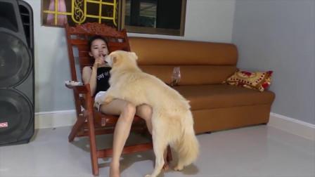 美女主人和狗狗在家玩耍,太有爱了,这画面太扎眼!