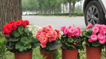 《花儿朵朵》