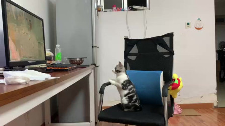 小猫咪一脸认真看魔兽世界,好像能看得懂似的