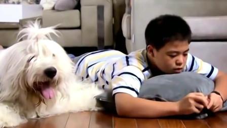 恶作剧之吻:袁湘琴和江直树撒狗粮,弟弟拿狗狗模仿,太可爱了