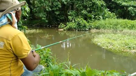 钓上来的鱼虽然小了点,但是不影响心情