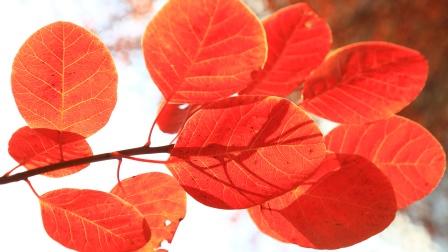紫若作品:莲花山-百丈崖赏红叶