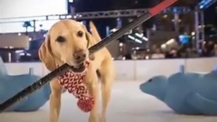冰球场出现神秘运动员,出场就吸引所有目光,网友:厉害了我的狗