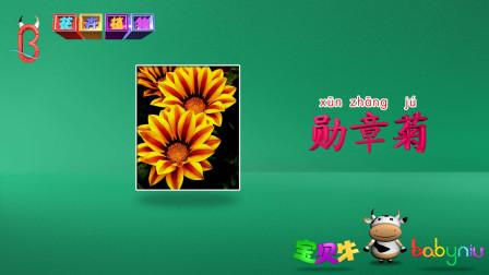 认知学堂 花卉植物第十集