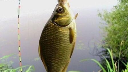 不愧是重口味的鲫鱼鲤鱼,这种东西你都爱吃,真优秀