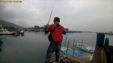 渔港矶钓,软竿细线遛大鱼,考验钓鱼人技术的时候到了