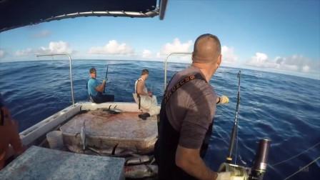 一下钓这么多金枪鱼,钓鱼人发财了吧,话说这鱼怎么这么傻呢?