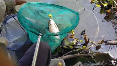 用海竿掉小鱼,确实有点不协调