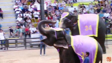 在泰国芭提雅东芭乐园,大象练得一手绝活,飞镖射气球让中就能中