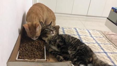 好心妹子救助了一只残疾猫,现在看起来越来越胖了呢