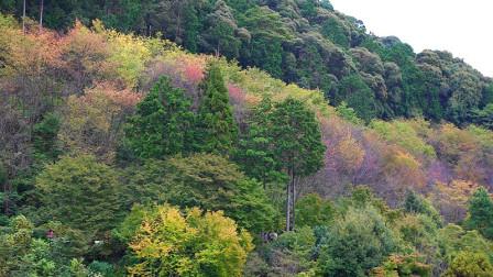 老钟游日本之京都清水寺